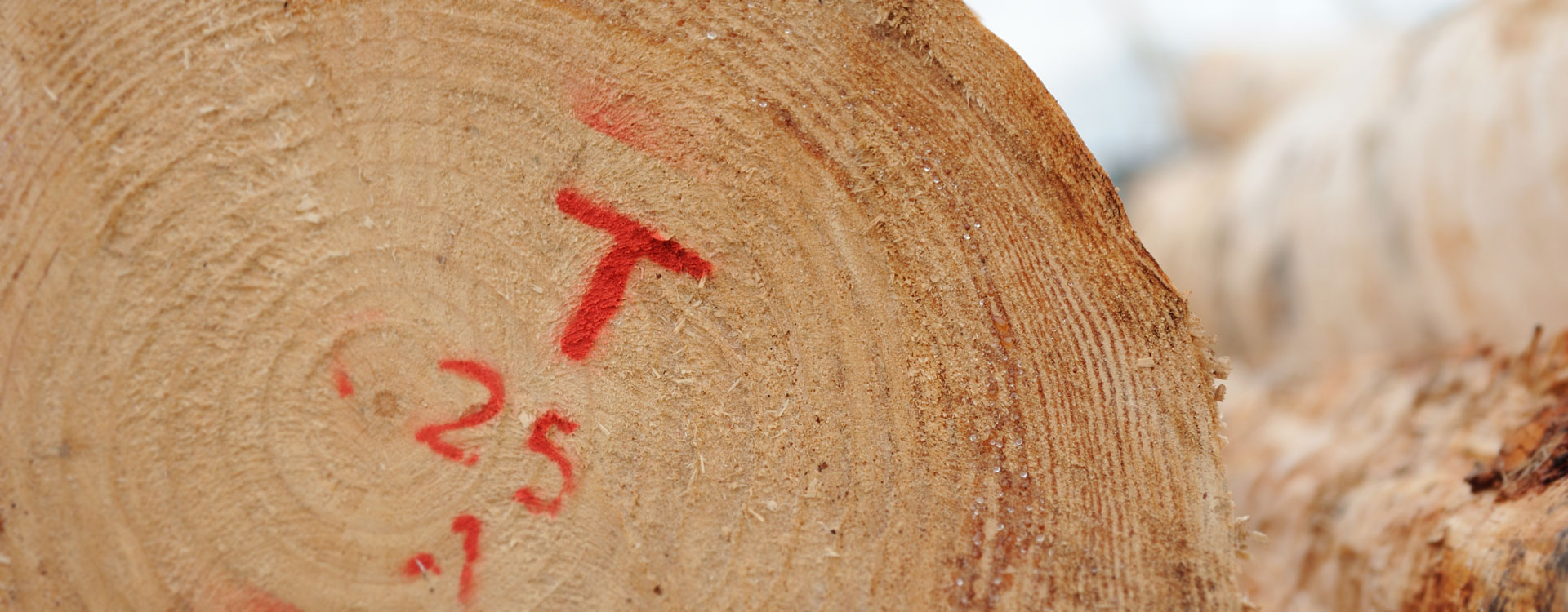 TENCO Exporter of Radiata Pine Logs